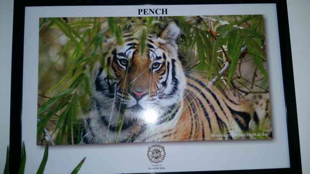pinch is tourism place in Madhya Pradesh