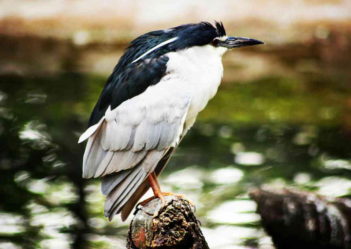 Mysore, Karnataka Wildlife, wildlife photography, canon, wild, bird, bird love, animal lover, wildlife planet