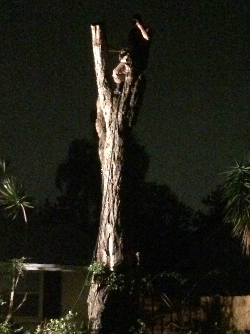 Night time emergency service, tree removal between 2 homes.