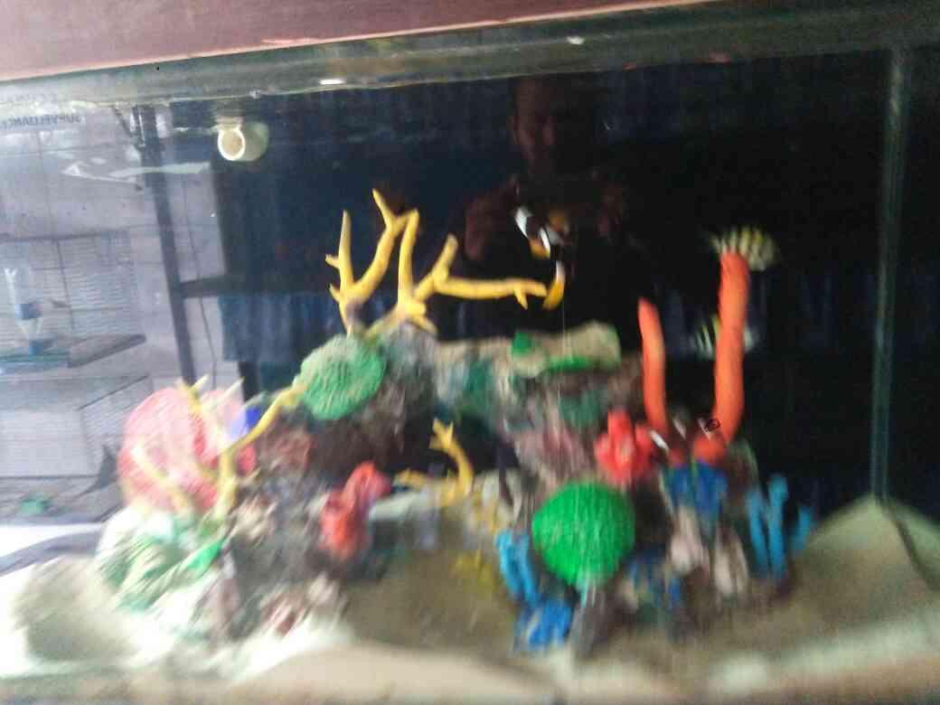 Excellent view of aquarium