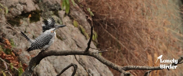 In India bird watching has increased rapidly due to the sheer increase in the number of avid birders. Bird watching in North India is now getting popular by the day. On our two-week serious-birding tour once can expect 425 species. Do let us know if you are keen to have more details related to Indian Birding tours.