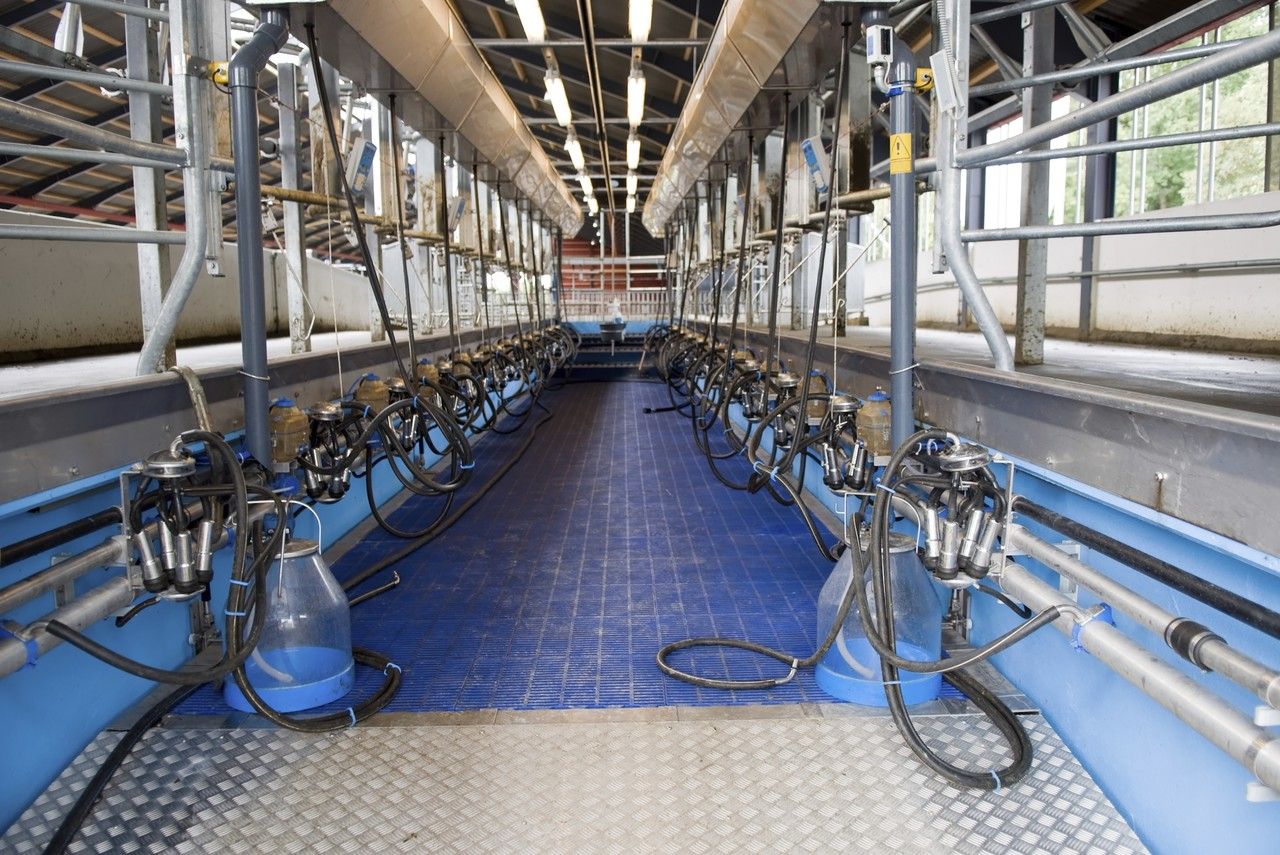 We are manufacturer and service provider for milking parlor in Delhi, Chennai, Uttarakhand, Pune, Maharashtra, Madhya pardesh, Uttar pardesh, Rajasthan, Punjab, Assma...