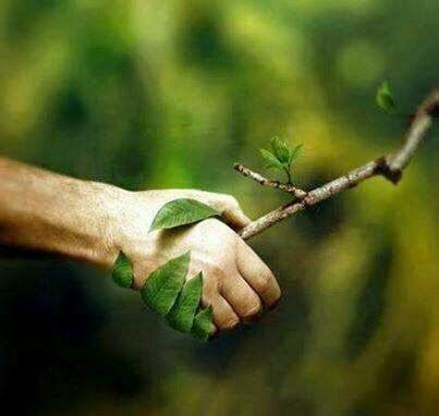 Happy world environment day to all.. www.uttarkarnataka.com - by Uttar Karnataka Welfare Society (R), Dharwad