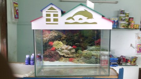 24+15+12 tenk with fish complet set only RS_2600 - by Aqua Magic The Aquariums Shop, Ahmedabad