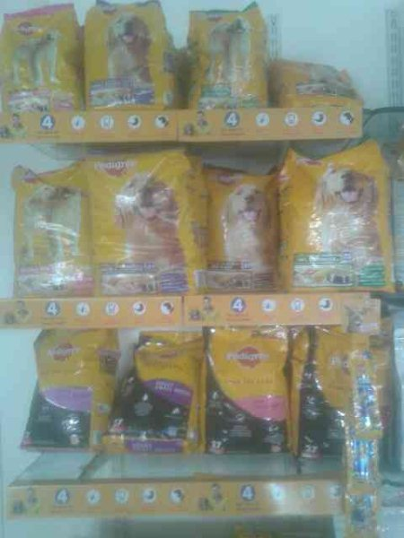 We provides you  pedigree. - by Doggy's, Ahmedabad