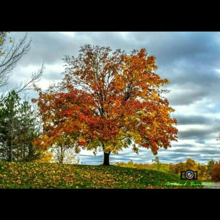 Beauty of the fall..!!  - by A.S.Photography, Erie County