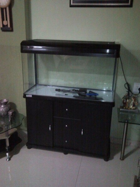 New stock coming soon - by Jal Aquariums And Pet Consultants, Ahmedabad