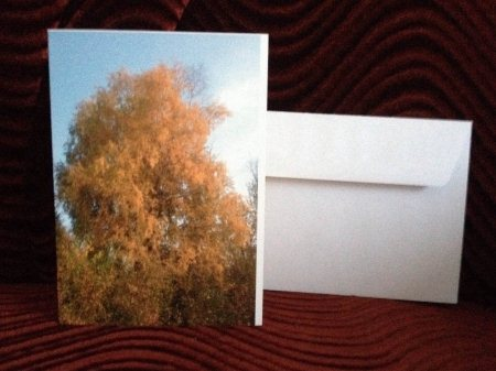 Need a card for an occasion? Write what you want inside, beautiful Birch Tree will look good when your friend opens up there card.  - by M & S Photography, Division No. 13