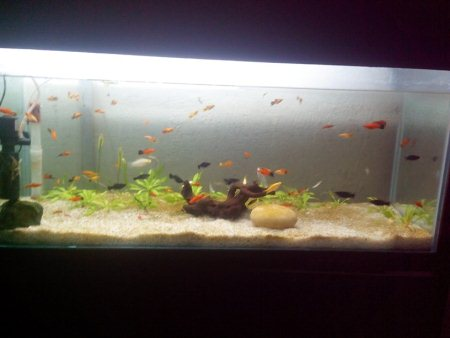 Planted livebearer aquarium...high end plants coming soon - by Jal Aquariums And Pet Consultants, Ahmedabad