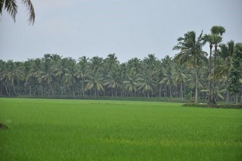 Razole.. Razole or Rajolu is a village in East Godavari district of Andhra Pradesh. The village is surrounded by the river Vashista Godavari and is known for its coconut and palm trees. The resort of Dindi is located on the banks of the God - by Dindi-The Godavari, Malkipuram