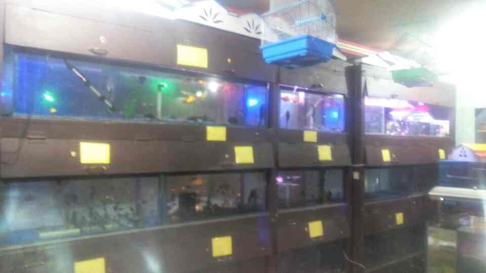 Aqua shop in dindigul - by Royalaquaandpets, Dindigul
