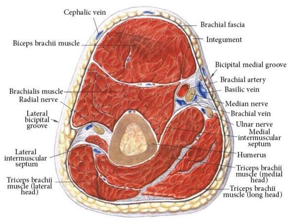 Anatomy  - by Medphyiq, New York County