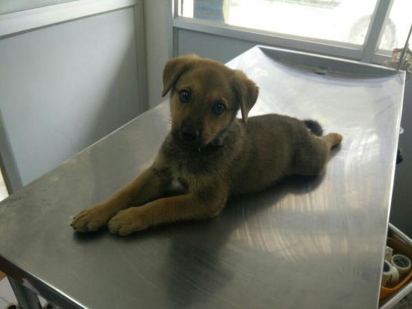 pet clinic in jeeven bheema nagar  - by Precise Pet Clinic & Diagnostics, Bangalore