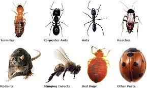 for Pest control please contact Hyderabad / Secendrabad,  Phone: 9441674448. - by super vision services, Hyderabad