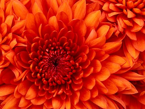 flower - by SERVICE, tirunelveli