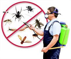 For Best Price & Best Services to House Keeping & Pest Control Services. Please contact (Hyderabad / Secundrabad): 9441674448  (Hyderabad / Secundrabad). - by super vision services, Hyderabad