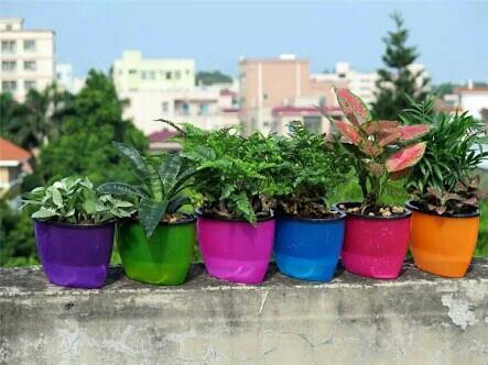 flower plant - by Asian Fibre Glass, Chennai