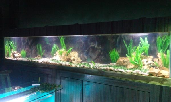 "Hi, This is a leading aquarium company ""REEFS AND RIVERS"" established in 1989, now relocated at Lake Town. We professionally deals in Marine, Planted and design aquarium, we are specialized in Marine, Plantation and giant aquarium making. W - by Reefs And Rivers, Kolkata"