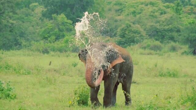 Sri Lanka is one of the finest wildlife watching countries in South Asia. The island may be small in size, but the variety of habitats, and the wildlife found there, would do justice to a country many times its size. Even a visitor with onl - by Bentota Tours, Kalutara