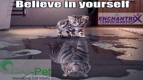 #CellPet A very unique liquid for your animal. It caters all their nutritional needs - by ENCHANTRIX ORGANIC PVT LTD, Delhi