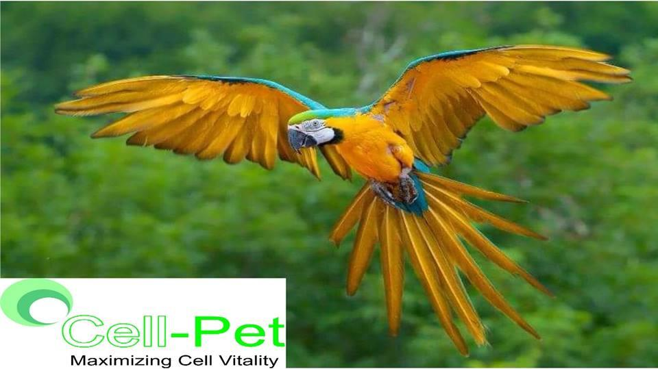#CellPetDrops, #CellPetFood For Birds With Amazing Results - by ENCHANTRIX ORGANIC PVT LTD, Delhi