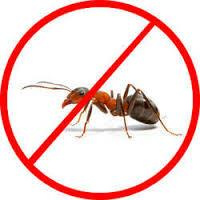 Ant Pest Control Service  Pest Control Services Poonawala offer expert solutions to our clients for this Ant Pest Control Service that can be found anywhere let it be lawn, homes, offices & buildings. - by Poonawala Pest Control, Pune