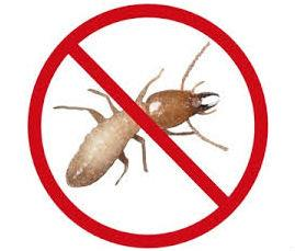 Pest Termite Control  Each home is unique so treatment should be customized accordingly. By working closely with your termite specialist, you can develop an appropriate and effective termite treatment plan for your home.  FIRSTLY, it is ess - by Velcare International, Bangalore