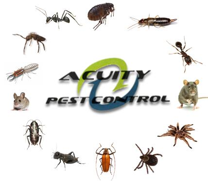 Best control services acuity  - by Acuity Pest Control, Bangalore