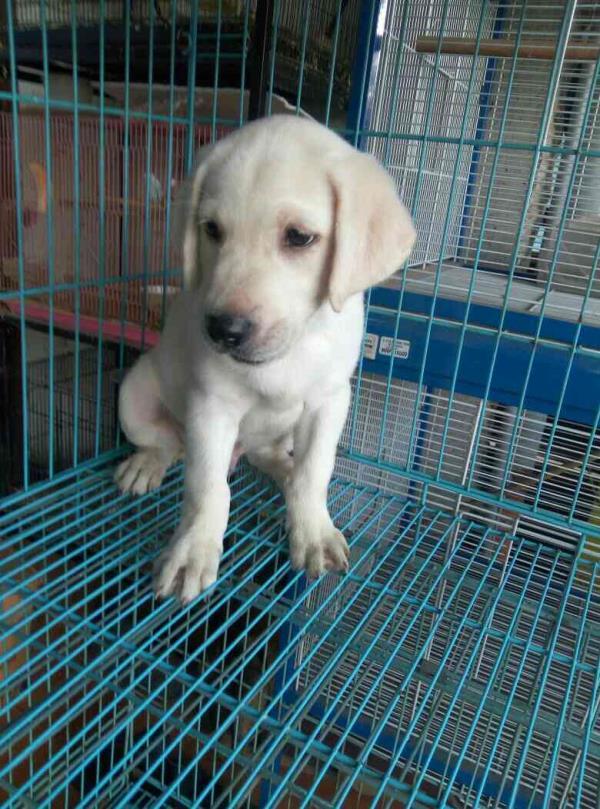 Pets Shop in Coimbatore Pet Accessories In Coimbatore Pet Shop In Selvapuram Aquarium Maintenance In Coimbatore Dog Training Service In Coimbatore Dog Boarding Kennel In Coimbatore - by RK Pets, Coimbatore