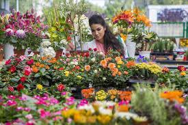 Florist in Jammu  - by My Shop, Jammu