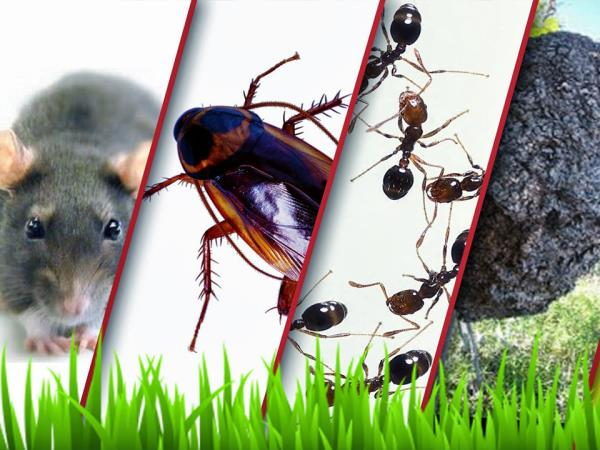 Hire the best Pest Control Services in India. And get exceptional pest management services. Pests and critters are one of the most disgusted creatures hiding inside our homes and offices. If left unchecked, it may also cause damage to prope - by Pest Control Services | Visakhapatnam, Visakhapatnam