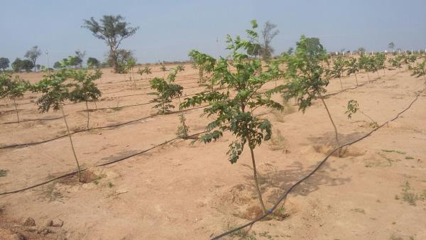 7 lakhs 1/2 acre farmland at pollapalli sez - by Space Vision Group, Hyderabad