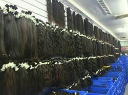 we are the best hair exports in chennai - by Sri Ragavendra Indian Hair Exports, Chennai
