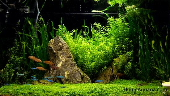 Planted aquarium In Chennai  - by Aqua Pro, Chennai