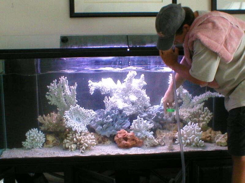 We Doing Best Service In maintenance for Aquarium in chennai - by Aqua Pro, Chennai