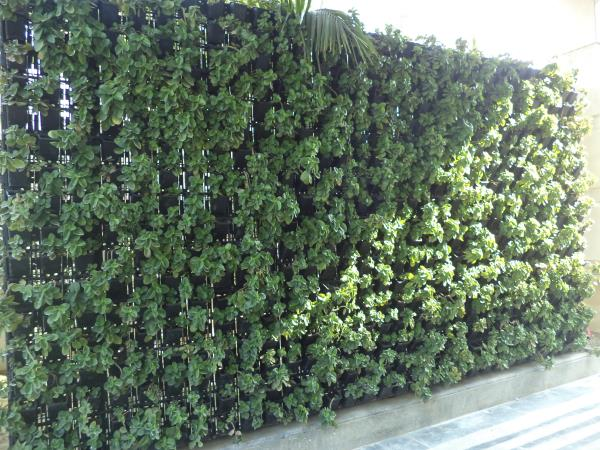 Vertical Garden in West Delhi  Where you doesn't have space for Garden, you can create your own Garden at Home, Balcony, Terrace, Varandah, Entry Point or Partitions, Industrial Area, Commercial Area, Office Area, Farm Houses and wherever y - by Vertical Garden Manufacturer, New Delhi