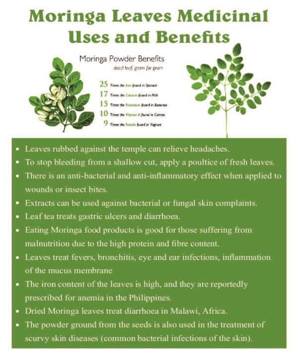 Moringa oleifera is a small size tree with approximately 5 to 10 m height. It is cultivated all over the world due to its multiple utilities. Every part of Moringa is used for certain nutritional and/or medicinal propose. Besides being a go - by Radiance pearl Glow, Bangalore Urban