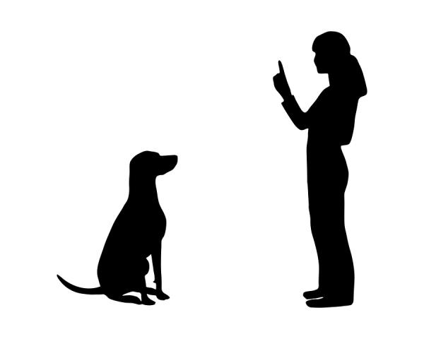 """Our Skilled """"Accredited Dog Trainers"""" use a positive approach to help get great results at each stage. Their techniques were developed by Leading #DogTrainers and Animal Behaviorists and are proven to be effective.  - by Rajesh Pets Shop 