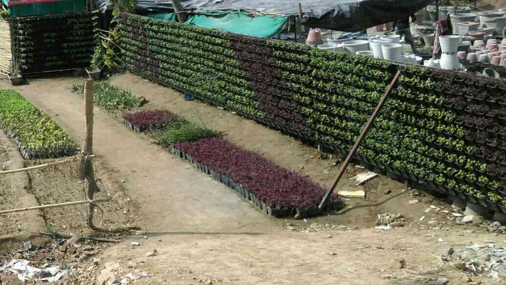 It's our nursery green Bio wall Wich use for plants growth and development. Without any delay we had done the project in 3 to 5 days only.  from  R.S ENTERPRISES west Delhi - by Vertical Garden Manufacturer, New Delhi