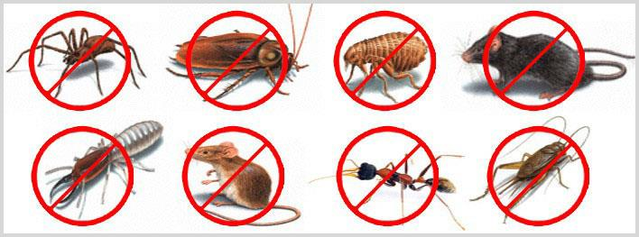 Pests we can Eradicate for You  Ants Termites Dust Mites Bed Bugs Ticks & Fleas Cockroaches Bees & Wasps Beetles, Borers & Weevils  Snakes Spiders Bird Lice & Bird Mites Catch and re-located Possums Rats & Mice Flies Mosquitos Moths Drain F - by Pest Control Services | Visakhapatnam, Visakhapatnam