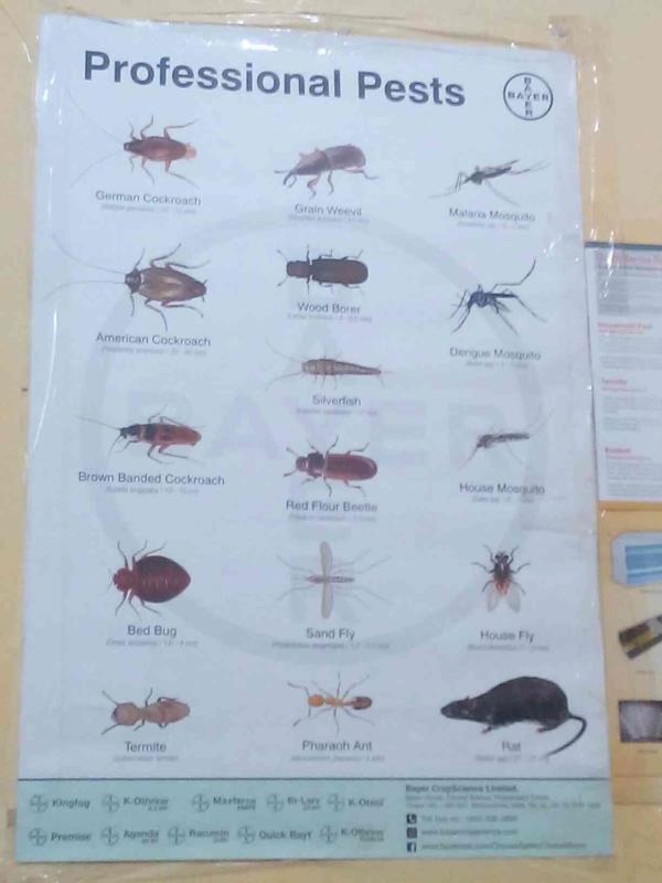 We are providing best Pest Management Services in Jaipur  - by Bug Buster Pest Management Services Pvt Ltd, Jaipur