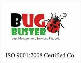 Bug Buster Pest Management Services Pvt Ltd  - by Bug Buster Pest Management Services Pvt Ltd, Jaipur