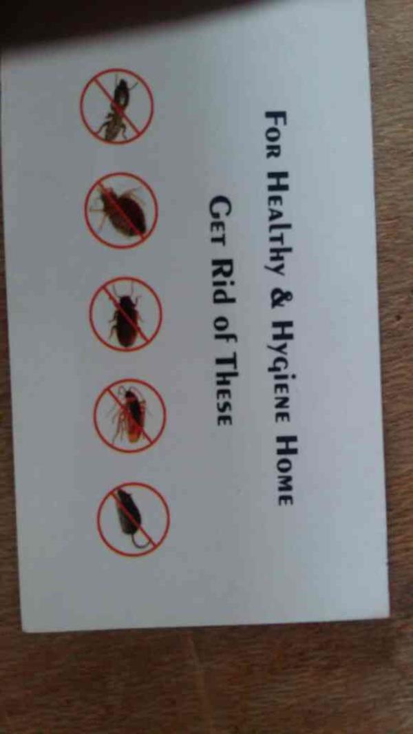 pest control in mysore  - by Icarepestcontrol, MYSORE