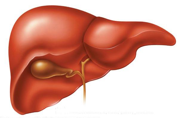 LIV-O-LIV SYRUP helpful in any type of liver disorders  We Provide Hepatomegaly Medicine In Noida - by Medila Herbal India Ltd. (Ayurvedic Products), Noida