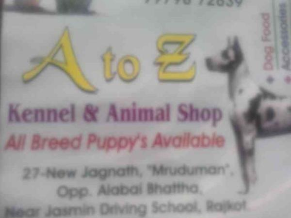 all types of animals  and all types of food available in our shop. our shop is one of the famous shop in town  more details contact us  - by Atozanimalshop, Rajkot