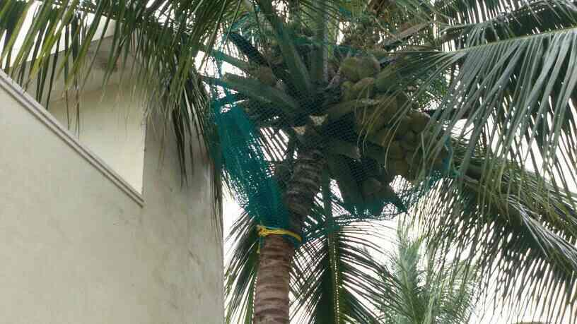 Coconut tree safety net, Now a days     Fall of coconut provide the net, Car glass safety, children's safety, public losses safety and some purpose very use full net, - by Ramana enterprises, Bengaluru