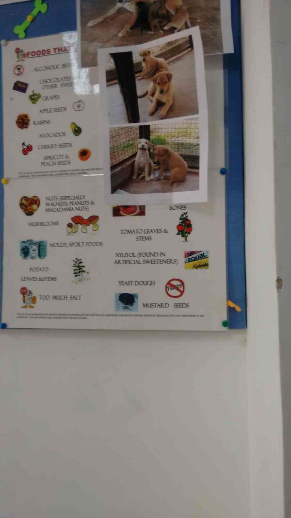 veterinary clinic in porvorim - by Petzone, Porvorim