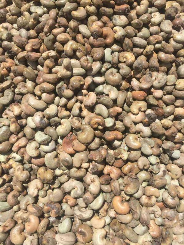 raw cashew supplier in ahmedabad. - by Akask, Ahmedabad
