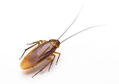 Pest  control service cockroaches bed bugs I'll kind of depressed contact list service providing you are interested in contact this number 9916777706 of what is going now only call please Pest control service in Bangalore  - by Good Rich Pest Control, Bangalore