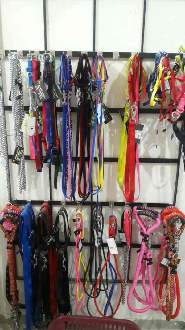 We are a leading supplier of all types accessories for dogs and also other pets. We are located at Vadodara, Gujarat. For more details you can log on  www.sunpetshop.in - by Sun Pet Shop, Vadodara
